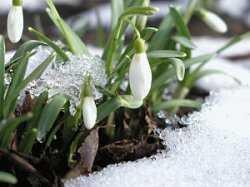 Какие сюрпризы приготовила астраханцам погода в марте