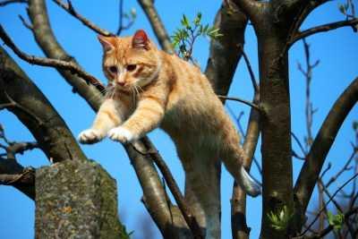 Сегодня первый день весны. Поговорим о котиках