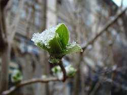 Астраханцам обещают теплую неделю с сильным ветром и дождями