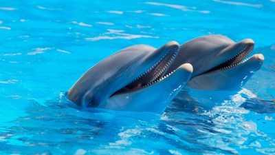 В Госдуме хотят запретить контактные зоопарки и передвижные дельфинарии