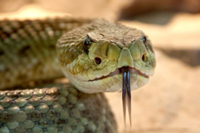 В высокой траве много змей в Астраханской области