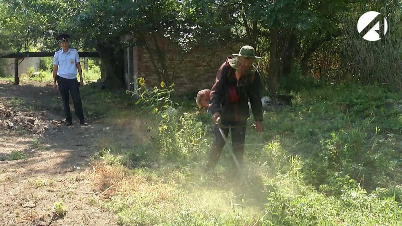 В Астраханской области до октября будут уничтожать коноплю на заброшенных дачах и пустырях