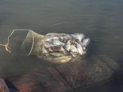 Вода в Астраханской области уходит. Купаться и рыбачить будет некомфортно
