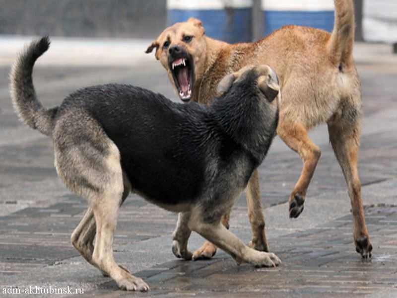 Еще раз о бродячих собаках