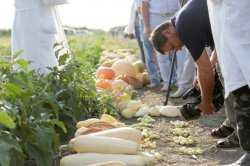 В Астраханской области ученые вырастили тыквопат, патичок и кабаксон