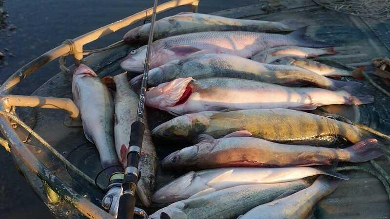В выходные в Астрахани ищем не рыбу, а затишку от ветра