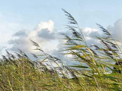 Ветер в Астраханской области будет усиливаться