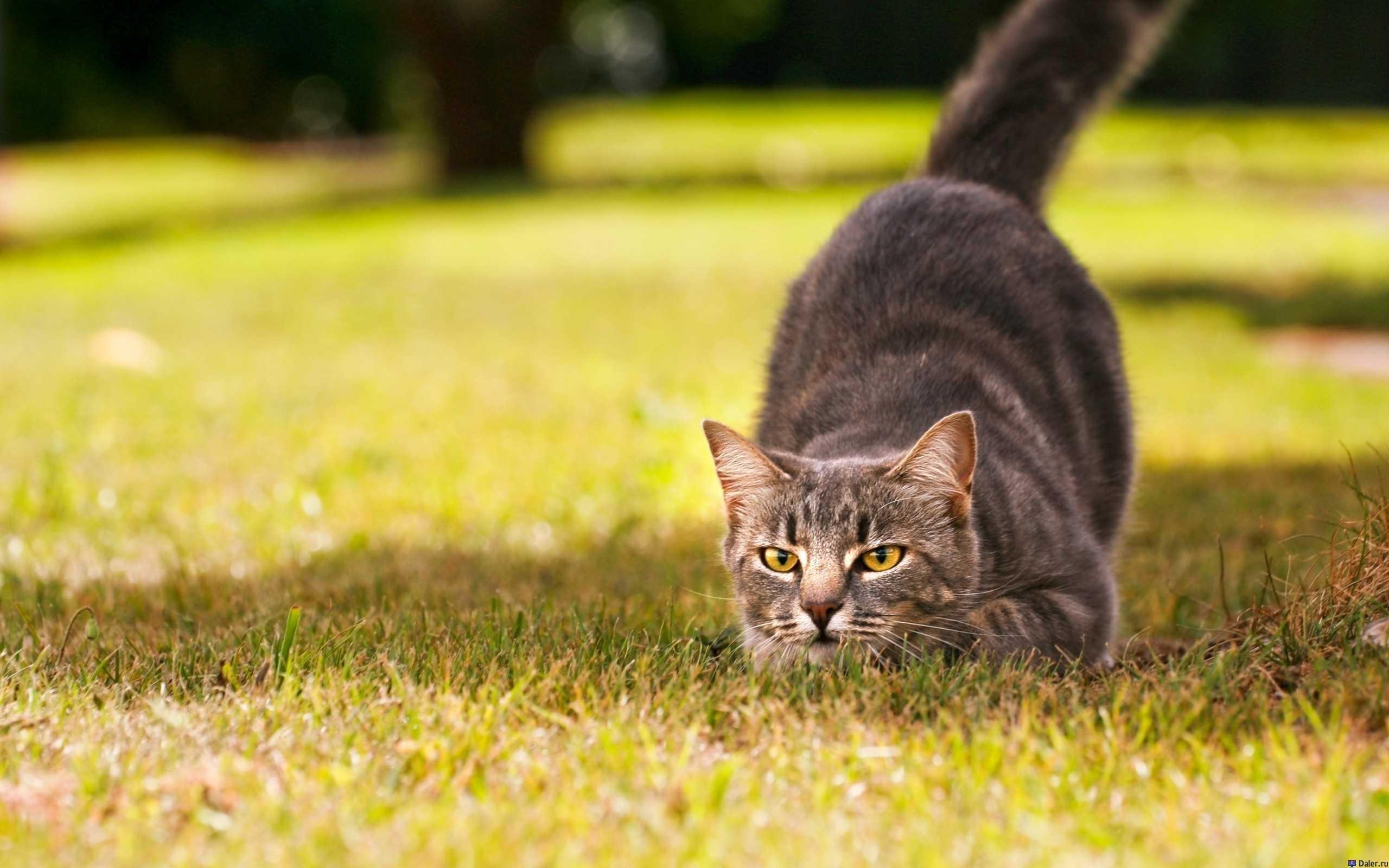Астраханцам придётся ставить домашних животных на учёт
