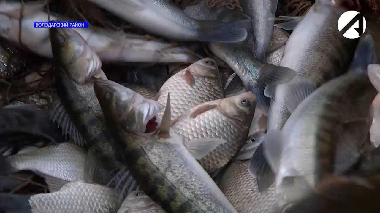 Астраханские рыбаки жалуются на улов и исчезающую в реке рыбу