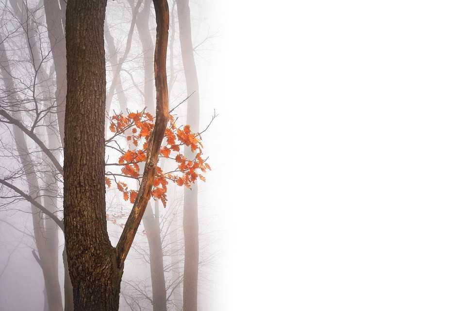 Туман, дождь и низкое давление обещают астраханцам