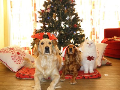 Как встречать год Собаки, чтобы все было хорошо в новом году