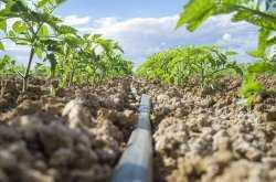 В Астраханской области начали производить свою ленту капельного орошения
