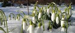 Астраханская погода в марте
