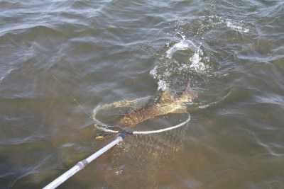 Рыба к нересту в Астраханской области не готова из-за поздней весны
