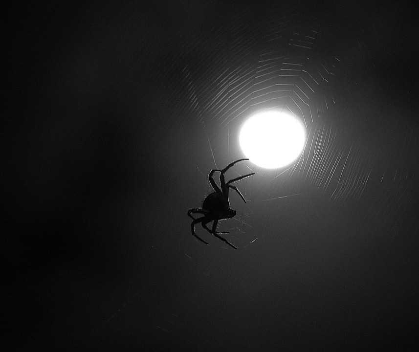 картинки зловещие пауки тату кошка крыльями