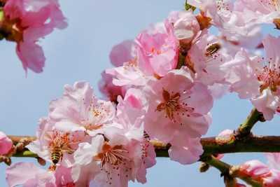 Астраханцы начнут праздновать первомай с конца апреля