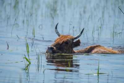 Паводок «отфутболили»: в Астраханской области вода продержалась неделю вместо трех и стала уходить