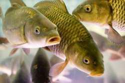 С сегодняшнего дня в Астраханской области запрещено ловить рыбу