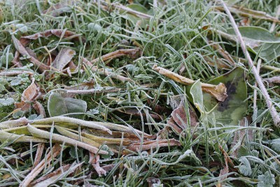 Срочная новость: Астраханская область ждет мороз
