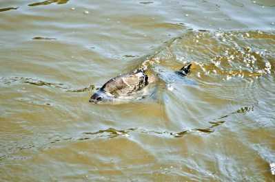 Волгу предложили спасать с помощью повышения «водных» тарифов