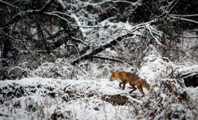 Про охоту: дыхание зимы сегодня настигло Астраханскую область