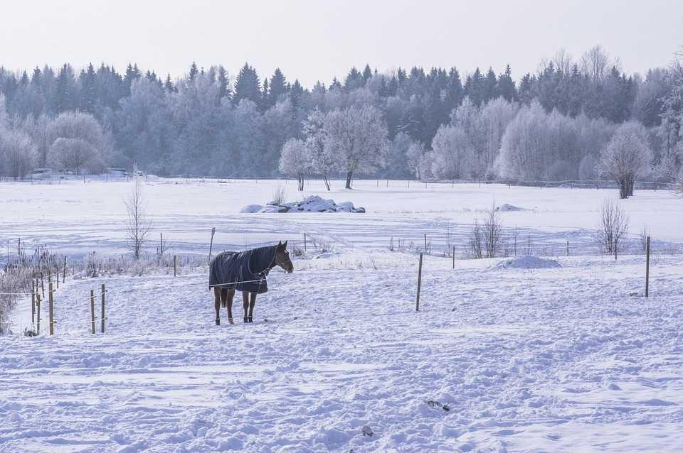 Кратковременный лютый холод накроет Астраханскую область