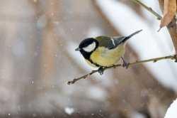 Записки астраханского натуралиста. О зимней подкормке птиц