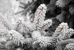 Завтра в Астраханской области ожидают изморозь и ветер