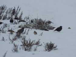 В астраханском заповеднике обнаружили редких птиц