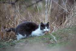 Записки астраханского натуралиста. Как живут одичавшие кошки