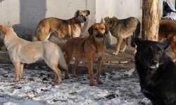 В Астраханской области убили больше 15 тысяч собак