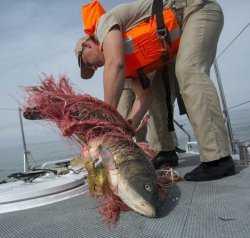 Астраханская рыбоохрана отчиталась: рыбаков-любителей не кошмарят