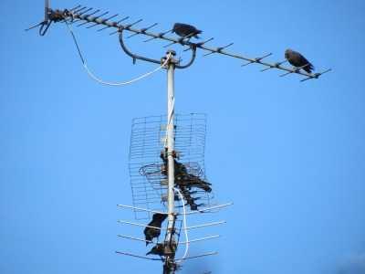 Отключение аналогового ТВ перенесли на осень