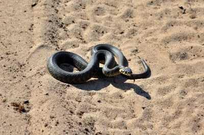 Змеи пугают астраханцев: что делать, если вас укусили