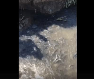 В Астраханской области сняли безысходное видео о рыбе