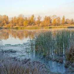 Волго-Ахтубинская пойма просто территория для извлечения бабла, – общественник Андрей Куприков