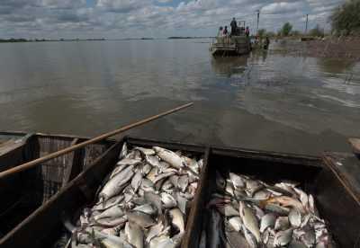 Жизнь астраханской рыбной отрасли в цифрах