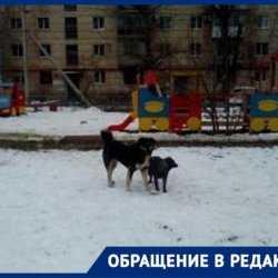 Стаи собак хватают детей за капюшоны и ранцы в центре Волгограда