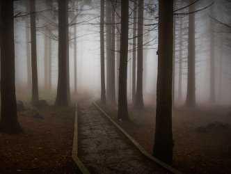 В лесу под Волгоградом найдено тело мужчины