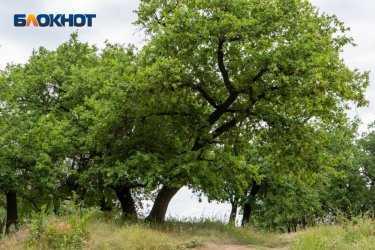 Волгоградец вступился за стройку, ради которой срубят дубы в волгоградской пойме